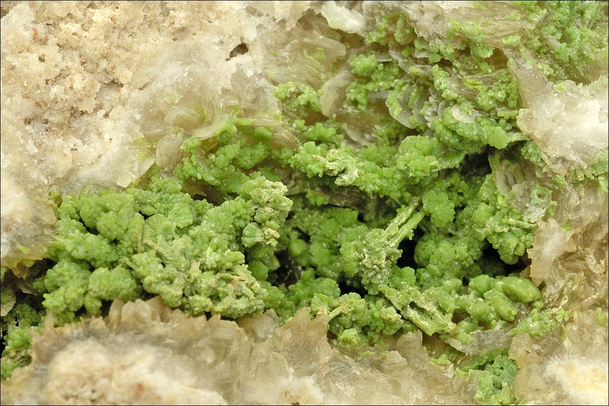Pyromorphite pseudomorphs after cerussite. Bunton Hush, Old Gang mines, Swaledale